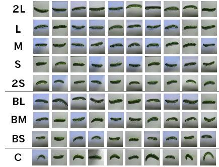 cucumber-farmer-9